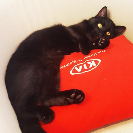 Katze Öli